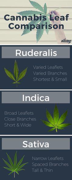 cannabis leaf comparison