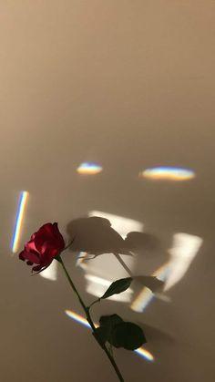 wallpaper rose flowers phone simple aesthetic iphone - simple and aesthetic rose flower iphone phone wallpaper Wallpaper Rainbow, Iphone Background Wallpaper, Rose Wallpaper, Tumblr Wallpaper, Trendy Wallpaper, Wallpaper Wallpapers, Screen Wallpaper, Rose Background, Wallpaper Ideas