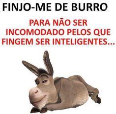 Burro ... Inteligente!