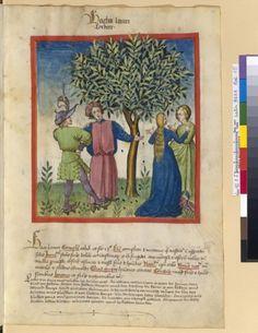 Tacuinum Sanitias 15C, Bibliothèque nationale de France, Latin 9333, fol. 15 Recolte des noisettes