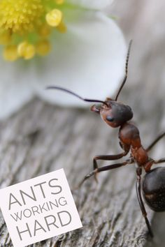 Ants - Living The Unexpected Life Summer Camp Activities, Activities For Kids, Questions To Ask, This Or That Questions, Hard Crafts, Preschool Programs, Find A Book, Underground Cities, Busy At Work