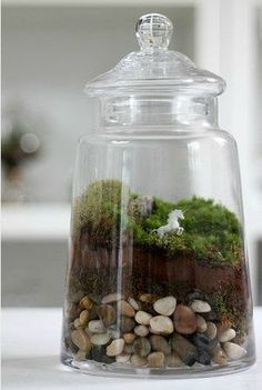 Miniatures in a terrarium. Oh the possibilities!
