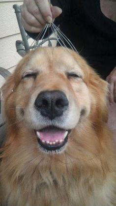 maliaria: Os cães mais felizes e sorridentes da internet