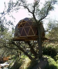 Dome tree house. Now that's cool, but not as safe as a dome can be on the ground.