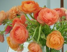 love the light peach ranunculus flowers too! Home Flowers, Beautiful Flowers, Beautiful Things, Persian Buttercup, Ranunculus Flowers, Peonies, White Ranunculus, List Of Flowers, Morning Flowers