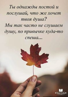 Qoutes, Life Quotes, Russian Quotes, Laws Of Life, Motivational Quotes, Inspirational Quotes, Biblical Verses, All Things Beauty, Texts