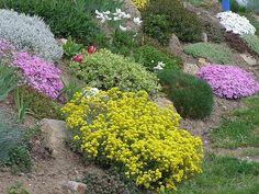 Alergik zahradníkem: skalničky zpravidla nemají alergenní pyl