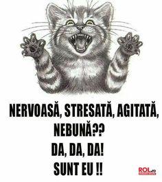 Good Jokes, Best Memes, Bff, Haha, Kitty, Humor, Funny, Movie Posters, Lgbt