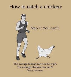 How To Catch a Chicken... LMAO!!!