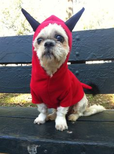 A red hoodie provides the basis for this infernal horned costume. Create a couple of felt cones that you stuff with cotton or paper, and glue or sew them onto the hood for one little devil you won't want to exorcise from your house.  Source: Etsy seller FiercePetFashion