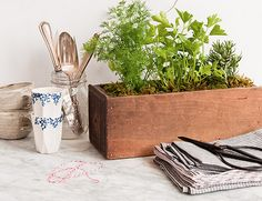 To do: plant a lovely herb garden in an old drawer for Earth Day.