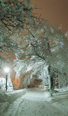 Park Zheleznovodsk, Krai (North Caucasus), Russia I love winter! I Love Snow, I Love Winter, Winter Snow, Winter Time, Winter Night, Winter Road, Snow At Night, Winter Walk, Beautiful Places