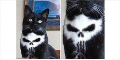 友達のネコの模様が最高にクールだった…。