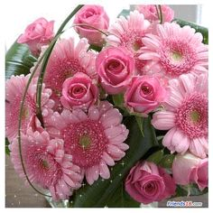 Free animated pink flower gifs google search pink for bbud free animated pink flower gifs google search mightylinksfo