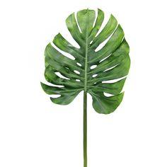 monstera leaf - Google zoeken