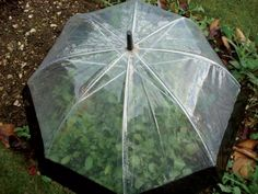 Take it outside and turn your old umbrella into a greenhouse or a protective covering for your plants ...