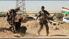 Kirkuk , the continuing victories of Peshmerga forces on their war against organize terrorist Daash