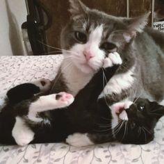 22-mães-de-filhotes-que-estão-terrivelmente-sobrecarregadas-1