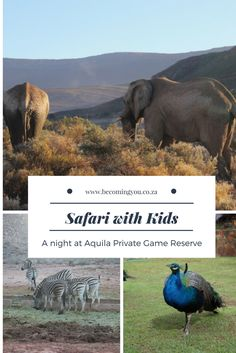 How to enjoy a family safari holiday on a private game reserve - South African style! Best Resorts, Hotels And Resorts, Best Hotels, Safari Holidays, Holidays With Kids, Private Games, Cape Town South Africa, Great Hotel, Great Vacations