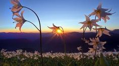 Image result for amazing sunsets wallpapers
