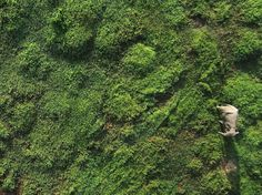An Asian elephant, photographed from the sky, courtesy Lian Pin Koh.