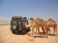These camels are admiring the ride!