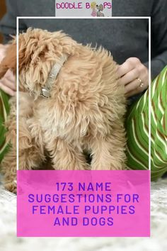 Coming up with the perfect name for your new puppy can be pretty difficult. Here are 173 super-cute suggestions that just may make your job a little bit easier.