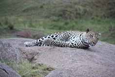 Herzlich willkommen in Tansania Travel Tours, Air Travel, Animal Pictures, Safari, World, Videos, Awesome, Animals, Tanzania