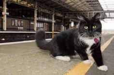 Felix the Huddersfield Railway Station cat.