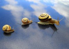 Snails - awesome photography