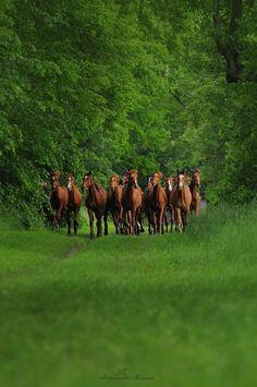 Herd of horses!                            Cantinho da Cristybel