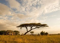 The Serengeti is at the heart of African safari. Rich in biodiversity and easily accessible, it offers some of the best safari experiences in Africa.