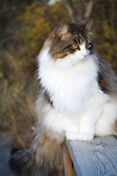 Lovely photo, lovely animal.
