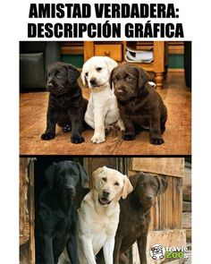 Diy Discover Dogs that dont shed much i want ideas Cute Baby Animals Animals And Pets Funny Animals Dog Memes Funny Memes Cute Puppies Cute Dogs Kawaii Dog Photos Cute Baby Animals, Animals And Pets, Funny Animals, Cute Puppies, Cute Dogs, Animal Jam, Dog Photos, I Love Dogs, Animals Beautiful