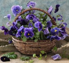 F. Bouquet