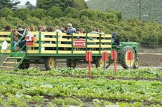 Educational Farm Tours - can include berries, veggies, animal feeding and wagon ride for $14 a person