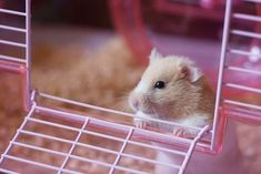 Spiffy Pet Care Tips... List of supplies needed to take care of a hamster #hamsterpet #hamsters