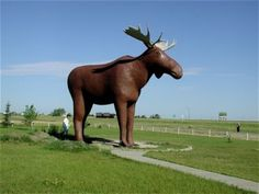 Meet 'Mac the Moose' of Moosejaw, Saskatchewan. Is he the weirdest roadside attraction in Canada? But he definitely draws a lot of attention! Mac stands 32 feet tall, weighs 10 tons, and greets the visitors of Moosejaw's information cente O Canada, Canada Travel, Alberta Canada, Places To Travel, Places To See, Parc A Theme, Saskatchewan Canada, Roadside Attractions, Worlds Largest