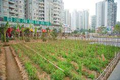 Landgrab City, Shenzhen, China by Joseph Grima, Jeffrey Johnson and José Esparza