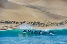 Bottlenose dolphins breaching with dune fields as a backdrop Bottlenose Dolphin, Port Elizabeth, Cruise Port, Dune, Dolphins, Fields, Shark, Backdrops, Waterfall