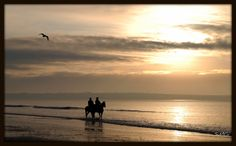 Golden horses Golden Horse, Horses, Celestial, Sunset, Outdoor, Outdoors, Sunsets, Outdoor Games, The Great Outdoors