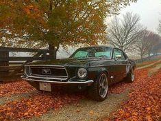 "1,021 Me gusta, 6 comentarios - FordCrazy Sean Linnihan (@fordcrazy) en Instagram: ""@bfgoodrichtires ・・・ Falling for this beautiful classic.  (: @bogenschutzzz)"""