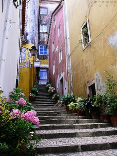 Sintra, Portugal. Walked up those stairs and it is beautiful.