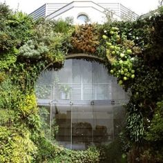 dr. of botany in paris, patrick blanc is the originator of the vertical garden