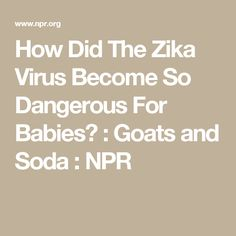 For decades, Zika had been relatively innocuous. A new study unravels the mystery of what caused thousands of cases of microcephaly. Zika Virus, Goats, Soda, Babies, Soft Drink, Babys, Sodas, Newborn Babies, Baby Baby