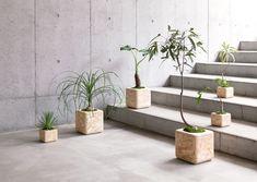 Mikiya Kobayashi ch9  chii by usuiworks 2012 Planter