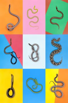 Vibrant Portraits Of Snakes Capture Their Bright And Playful Side