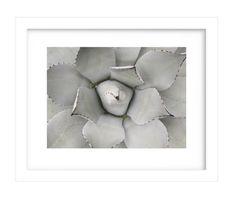 Cactus Photography Cactus Print Desert Art by MaxMeOneUniverse
