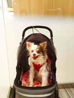 Our girl Lily Penelope Hughes. In her stroller at lunch at Neiman Marcus, Beverly Hills ~ Mom & Dad's best friend.
