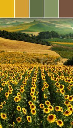 Sunflowers in Spain Designed By Ange Gaffke via Stylyze